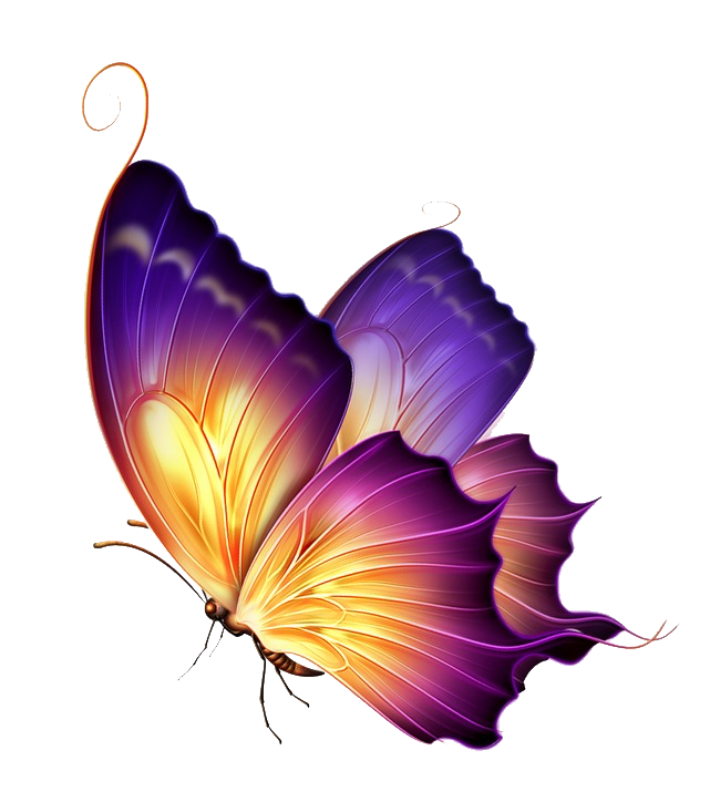 Colour of a butterfly